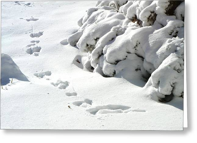 footprints in the Snow Greeting Card by Rachel Christine Nowicki