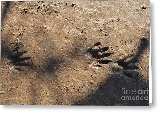 Footprints2 Greeting Card by Laurianna Taylor