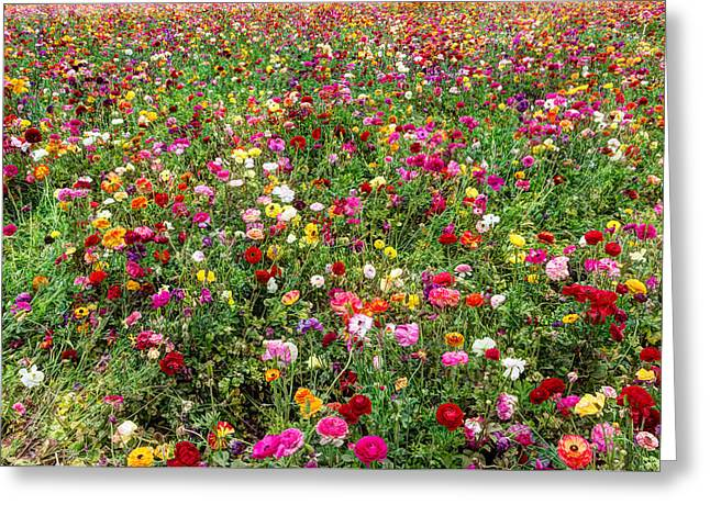 For As Far As The Eye Can See Greeting Card by Heidi Smith