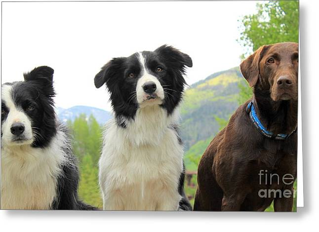 For The Love Of Dogs Greeting Card by Fiona Kennard