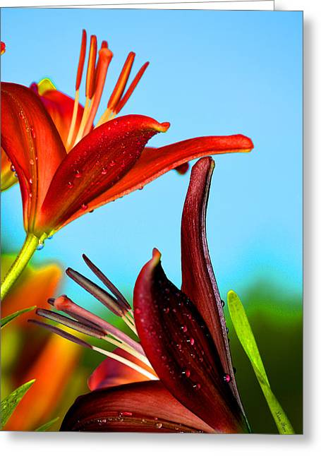 For The Love Of Lillies Greeting Card by Lesa Fine