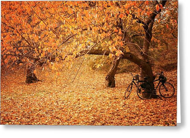 For Two - Autumn - Central Park Greeting Card by Vivienne Gucwa