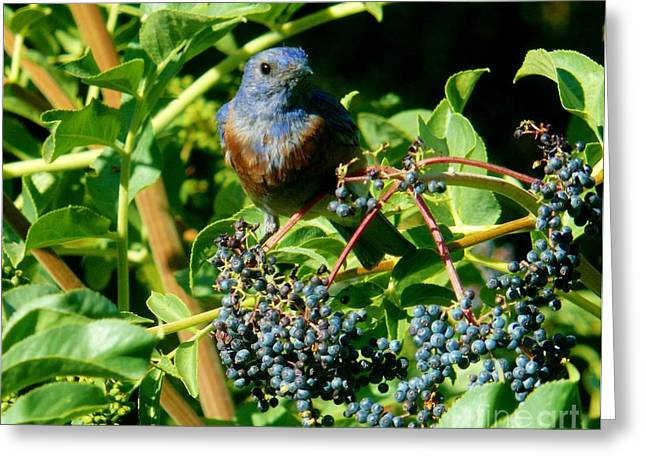 For You - Blue  - 2 Greeting Card by Jacquelyn Roberts