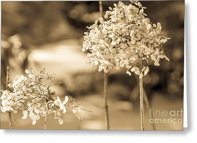 For You Greeting Card by Sue OConnor
