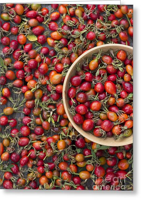 Foraged Rose Hips Greeting Card by Tim Gainey