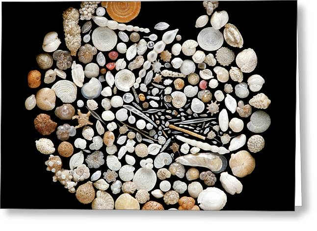 Foraminifera From Lagoon Of Venice Greeting Card