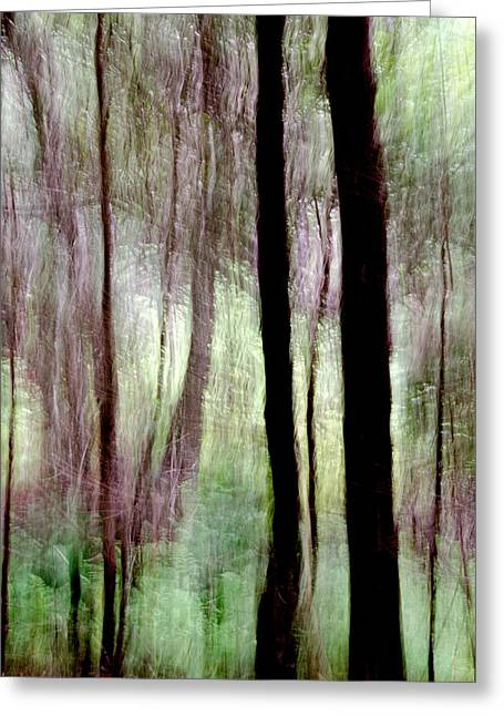 Forest Abstract Near Tantallon Nova Scotia Greeting Card by Rob Huntley