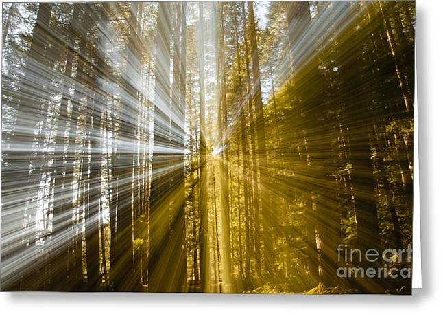 Forest Abstract Greeting Card by Vivian Christopher