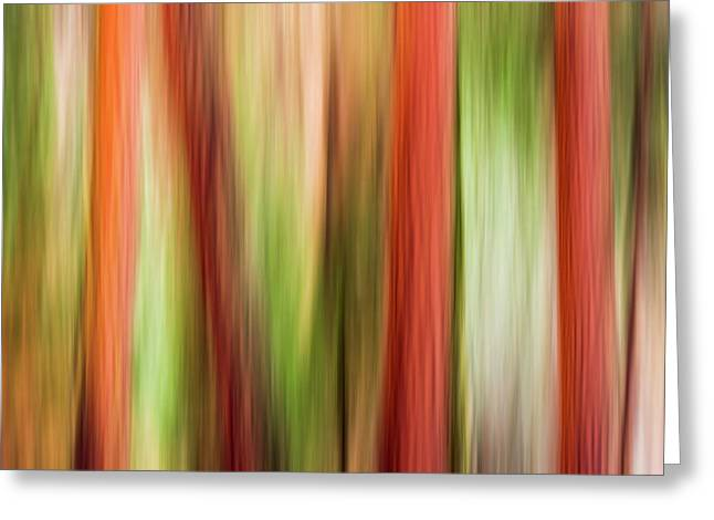 Forest Abstract, Yosemite Valley Greeting Card