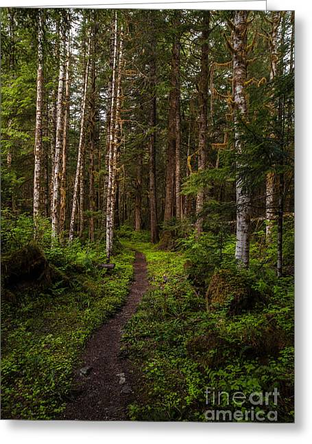 Forest Alder Path Greeting Card by Mike Reid