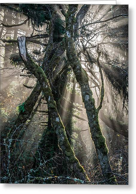 Forest Beams Greeting Card by Mike  Walker