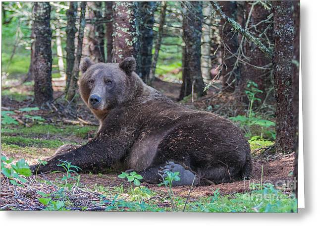 Forest Bear Greeting Card