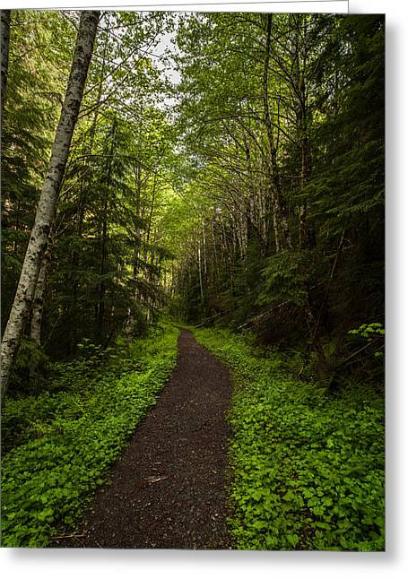 Forest Beckons Greeting Card by Mike Reid