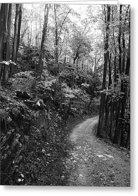 Forest Black And White 12 Greeting Card by Falko Follert