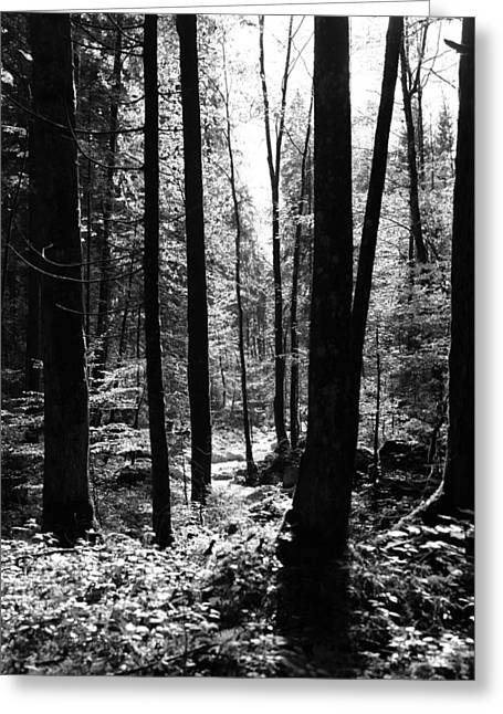 Forest Black And White 13 Greeting Card by Falko Follert