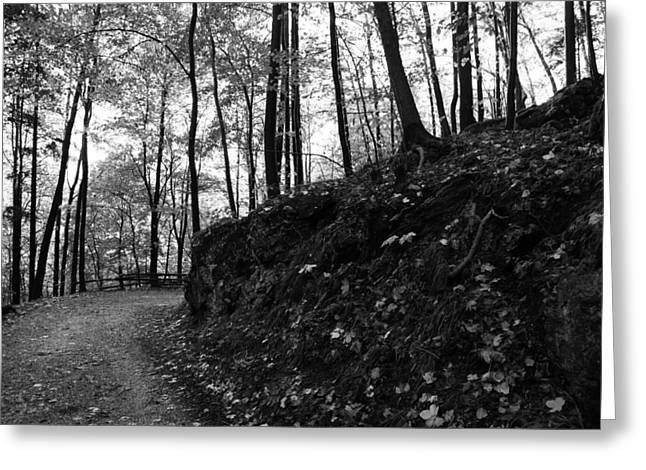 Forest Black And White 5 Greeting Card by Falko Follert