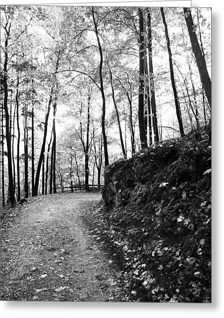 Forest Black And White 6 Greeting Card by Falko Follert