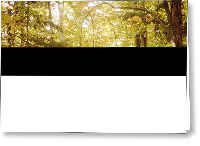 Forest, Catskill Mountains, New York Greeting Card