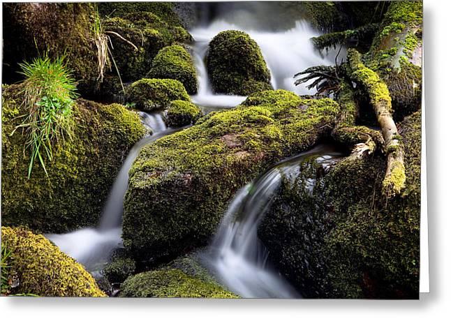 Forest Creek Streaming Between Moss Greeting Card by Dirk Ercken