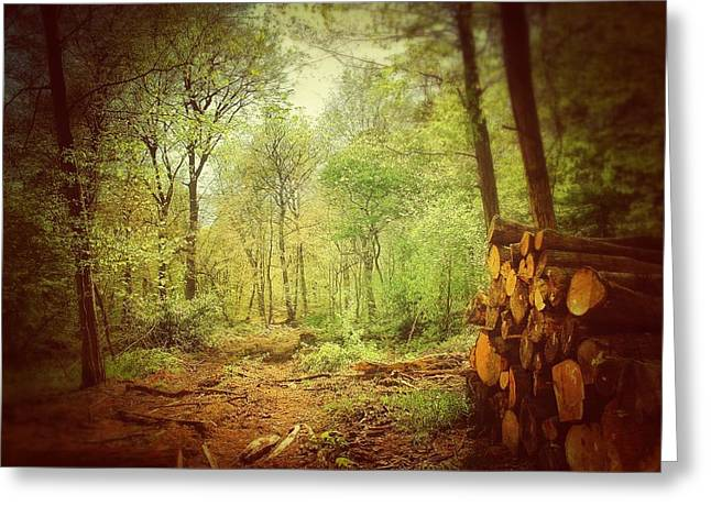 Forest Greeting Card by Daniel Precht
