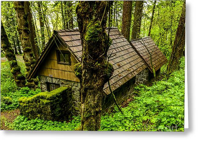Forest Dwelling - Oregon Rainforest Greeting Card by Gary Whitton