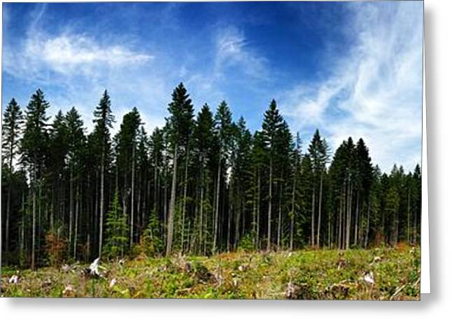 Forest Edge Greeting Card by Jeff Klingler