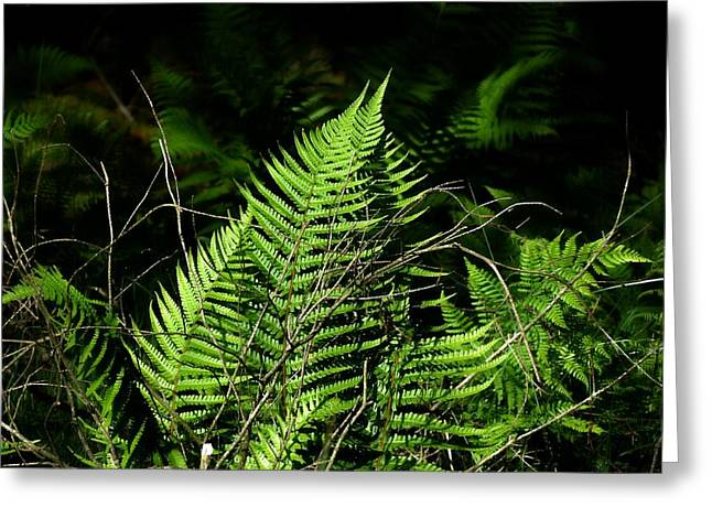 Forest Ferns Greeting Card