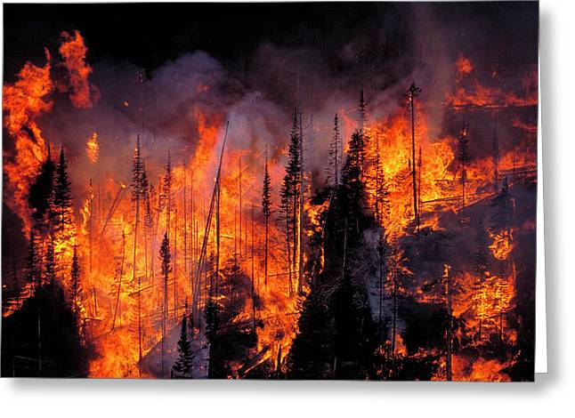 Forest Fire Greeting Card by Kari Greer/science Photo Library