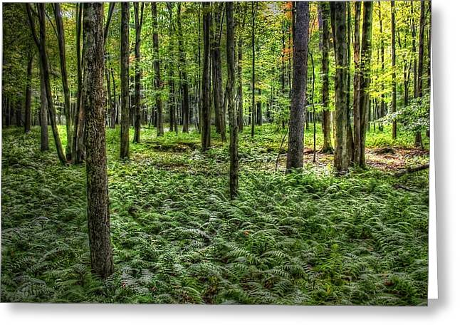 Greeting Card featuring the photograph Forest Floor by David Armstrong