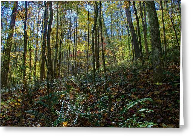 Forest Floor Greeting Card by Doug Hubbard