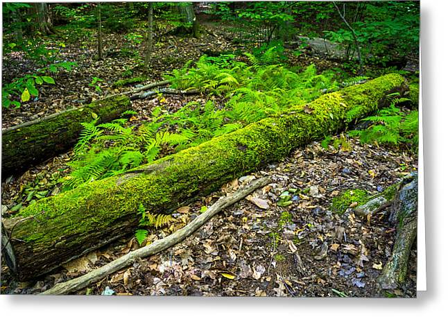Forest Floor Gosnell Big Woods Greeting Card by Tim Buisman