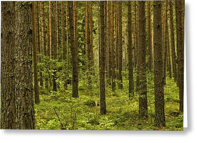 Forest For The Trees Greeting Card by Nancy De Flon