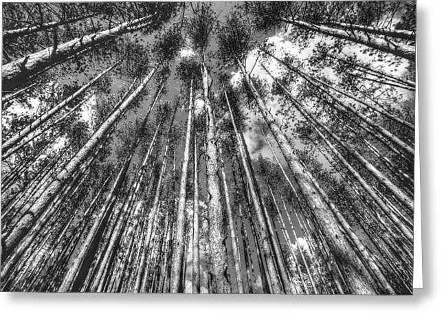 Forest Guards Greeting Card by Dawn J Benko