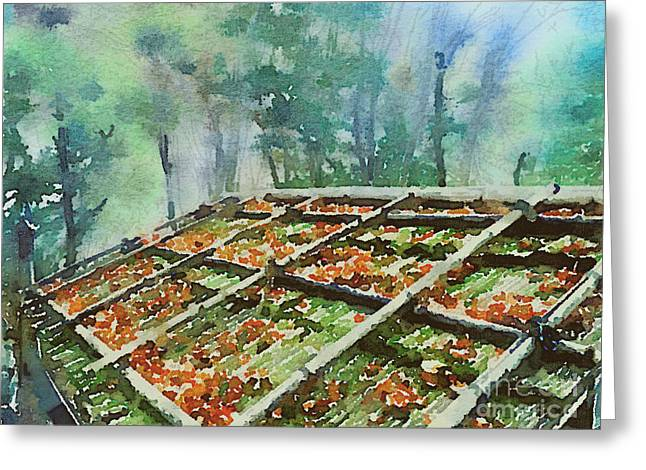 Forest Hut Roof With Moss And Fallen Autumn Leaves Greeting Card by Beverly Claire Kaiya
