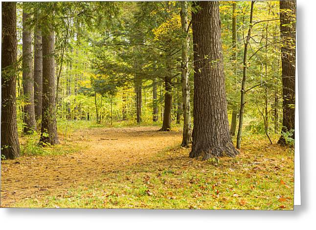 Forest In Autumn, New York State, Usa Greeting Card