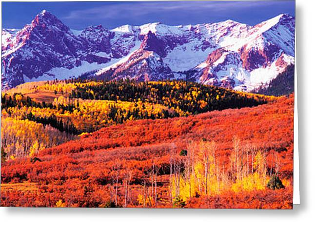 Forest In Autumn With Snow Covered Greeting Card