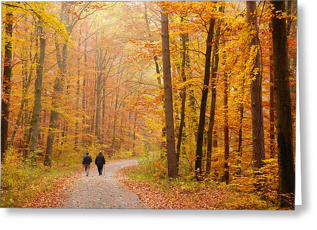 Forest In Fall - Trees With Beautiful Autumn Colors Greeting Card