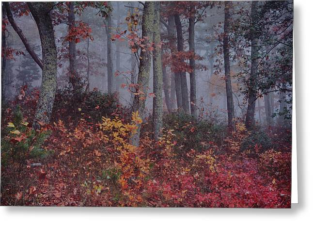 Forest In Fog Greeting Card