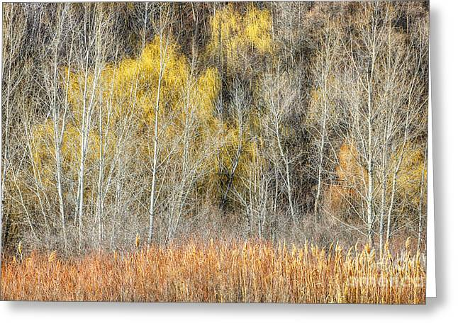 Forest In Late Fall At Scarborough Bluffs Greeting Card by Elena Elisseeva