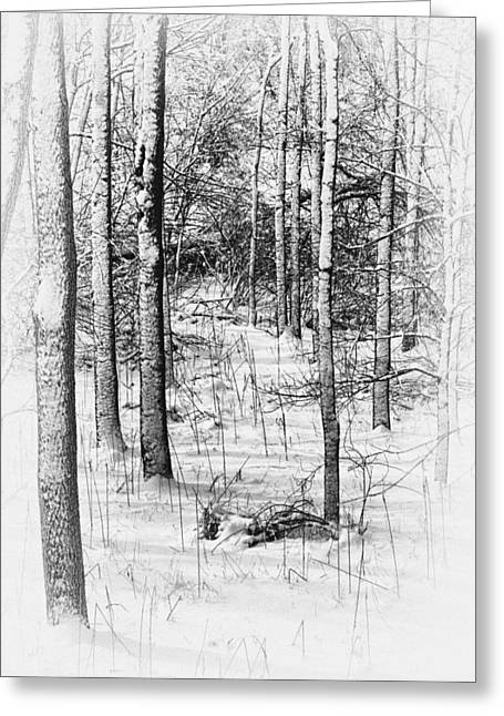 Forest In Winter Greeting Card by Tom Mc Nemar