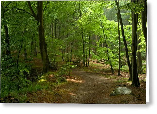 Forest Greeting Card by Iryna Soltyska