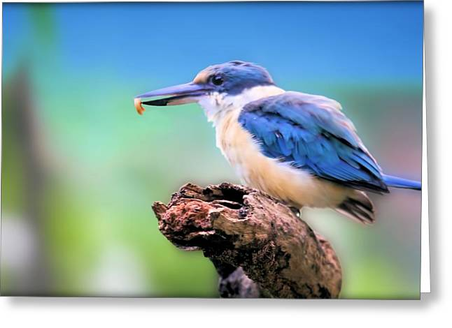 Forest Kingfisher With Breakfast Greeting Card