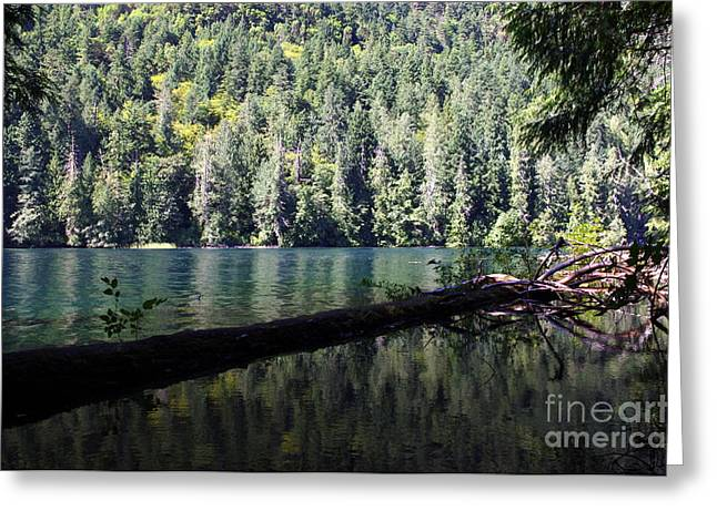 Forest Lake Greeting Card by Erin Baxter