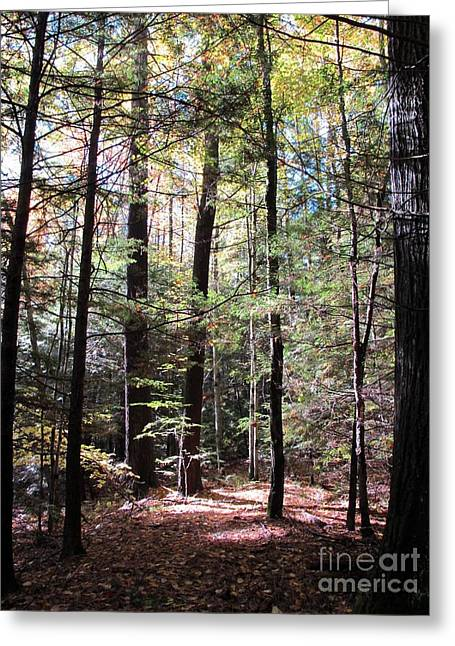 Forest Light Greeting Card by Linda Marcille