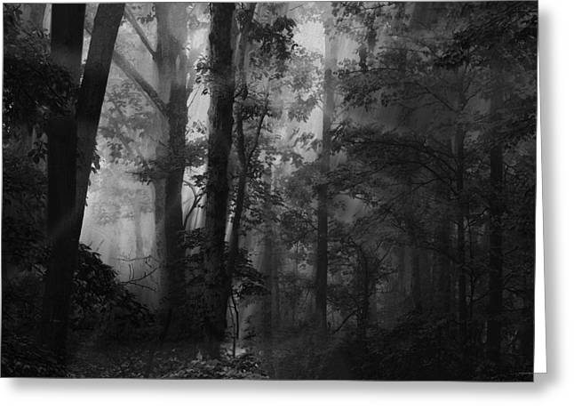 Forest Light Greeting Card by Ron Jones