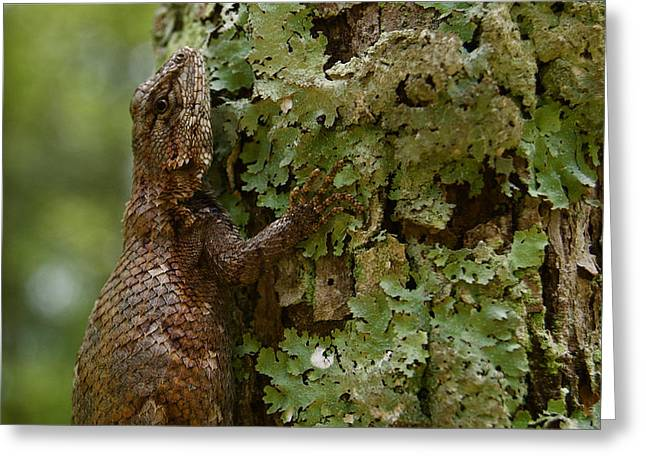 Forest Lizard 2 Greeting Card