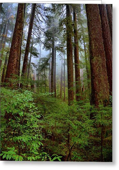 Forest Mist Greeting Card