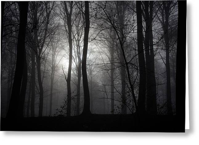 Forest Mist Greeting Card by Mark David