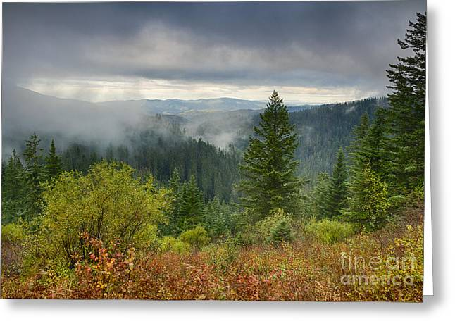 Forest Mists Greeting Card