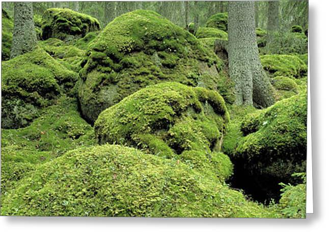 Forest Moss Sweden Greeting Card by Panoramic Images